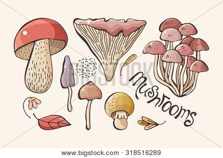 Vector Set Of Colored Forest Mushrooms. Hand Draws. Inscription. Assortment Of Mushrooms, White Mush