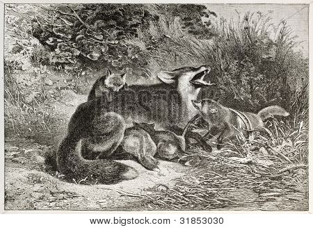 Fox in the trap old illustration. Created by Bodmer, published on L'Illustration, Journal Universel, Paris, 1863