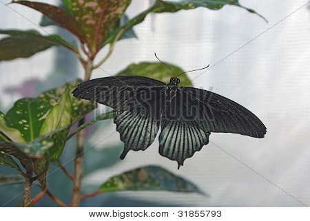 Beautiful Butterfly On The Leaf