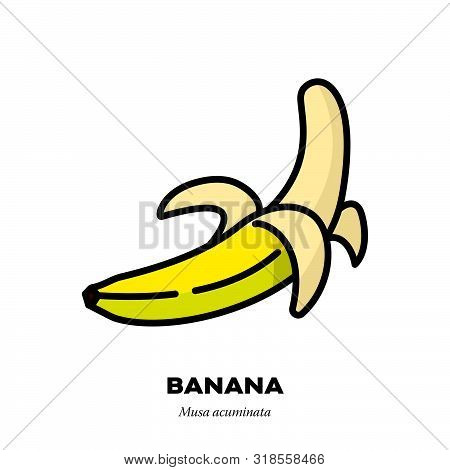 Banana fruit icon, outline with color fill style vector illustration, half peeled poster