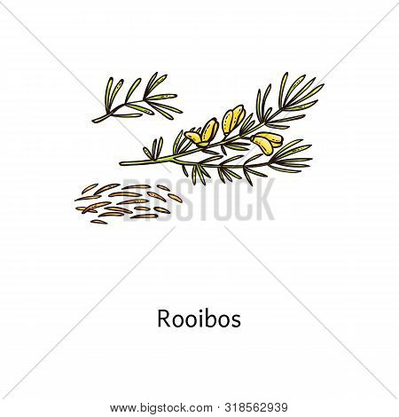 Roobos Plant Drawing With Fresh Green Leaf And Steeps Twigs