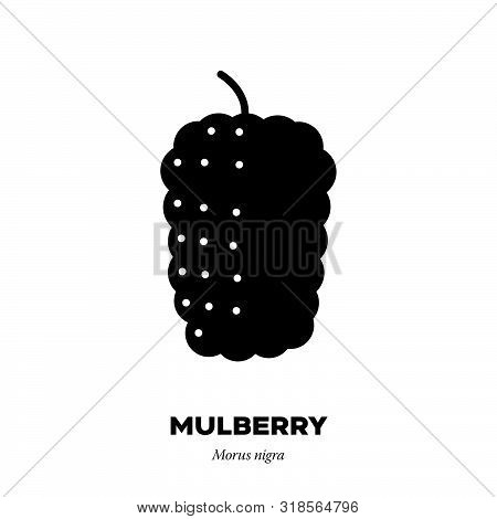 Black Mulberry Fruit Icon, Outline With Color Fill Style Vector Illustration