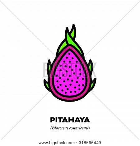 Pitahaya Or Dragon Fruit Icon, Outline With Color Fill Style Vector Illustration, Cross-section Of P