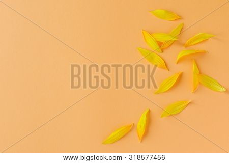 Beautiful Yellow Petals Of Sunflower On Peach Background. Place For Text.