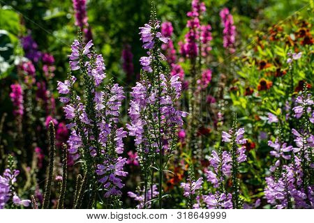 View Of Colorful Flowers In The Summer Time Garden. Photography Of Lively Nature.