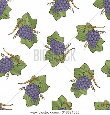 Purple Grapes With Leaves Colored Illustration Seamless Pattern Background With Engraving Shading.