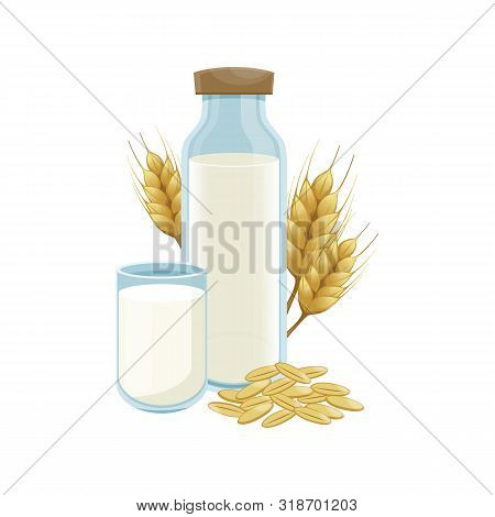 Milk Wheat In A Glass Bottle. Healthy Lifestyle. Vector Wheat Ears Spikelets With Grains. Wheat Vega