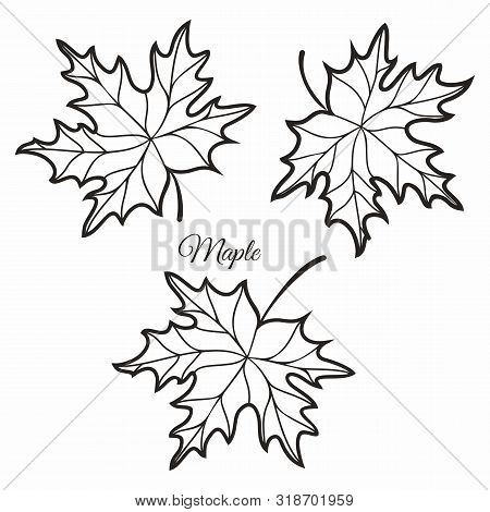 Maple Leaves In Stained Illustration. Maple Leaves. Autumn Design. Forest Themes. Autumn Isolated Le