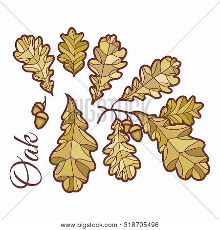 Birch Leaves In Stained  Illustration. Hand Drawn Birch Branch With Catkins. Doodle Floral Design El