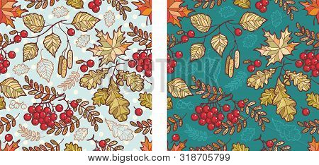 Autumn Leaves Seamless Pattern With Rowan, Maple, Birch And Oak. Fall Leaf Design.foliage Forest Lea