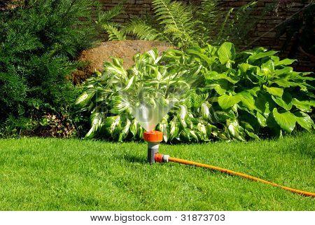 Yellow sprinkler watering the backyard garden.