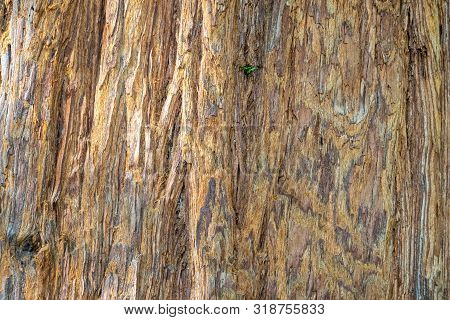 Close Up Of Redwood Bark. Seamless Tree Bark Background. Brown Texture Of The Old Tree. Sequoia Semp