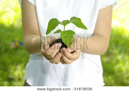 plant in the girl hands