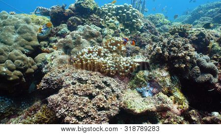 Tropical Fishes And Coral Reef, Underwater Footage. Seascape Under Water. Camiguin, Philippines.