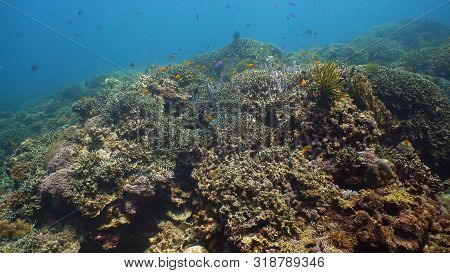 Tropical Coral Reef. Underwater Fishes And Corals. Camiguin, Philippines.
