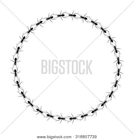 Frame From Ants Going In A Circle. Path Ants On Circle. Ant Trails. Vector Illustration
