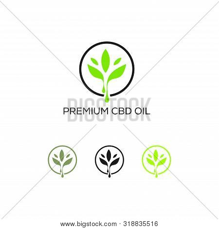 Cannabis Leaf Logo Designs Inspiration Isolated On White Background, Maple Cannabis Logo Icon Vector