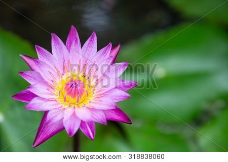 Lotus Flowe At Winter Or Spring Day. Lovely Spring Lotus Flowers. Spring Flower Landscape. Spring Fl