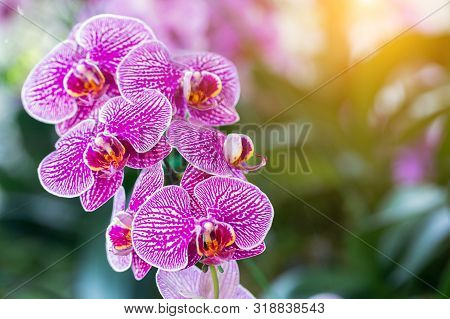 Orchid Flowe At Winter Or Spring Day. Lovely Spring Orchid Flowers. Spring Flower Landscape. Spring