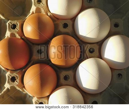 Organic White Eggs Vs. Farm Organic White Eggs Vs. Farm Eggs. White Natural Organic Eggs And Chicken