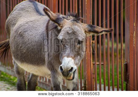 Gray Donkey In The Corral Of The Zoo. Animal World.