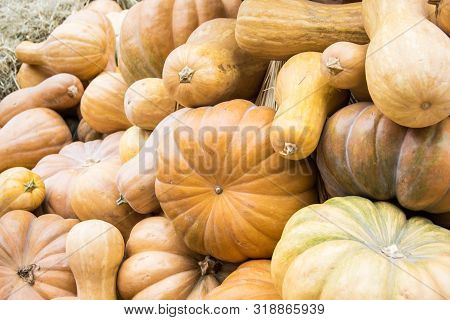 Heap Of Different Shaped Pumpkins With Hay At The Farmers Market. Autumn Authentic Warm Color Backgr