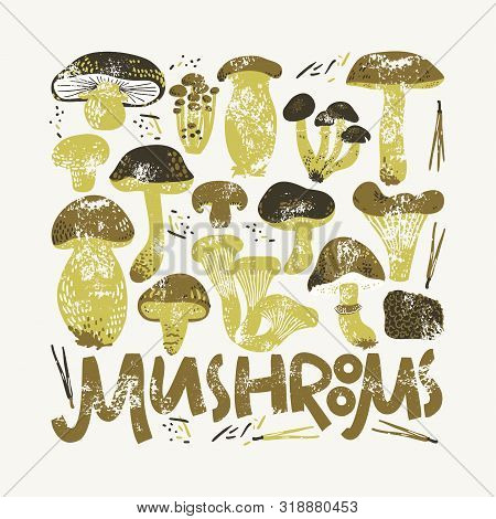 Edible Mushrooms Poster. Linocut Old Style. Hand Drawn Vector Illustration
