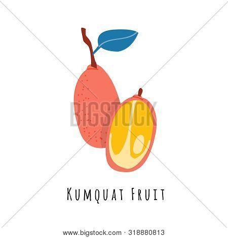 Kumquat Fruit Flat Vector Illustration. Cartoon Slices Of Exotic, Tropical Fresh Fruit. Clipart With