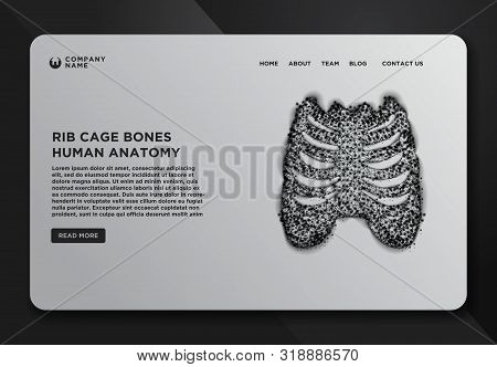 Web Page Design Templates Collection Of Thorax- Ribs, Sternum, Clavicle, Scapula, Vertebral Column.