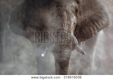 Amazing African Elephants. Huge Elephants Male In Front Of The Camera. Wildlife Scene With Dangerous
