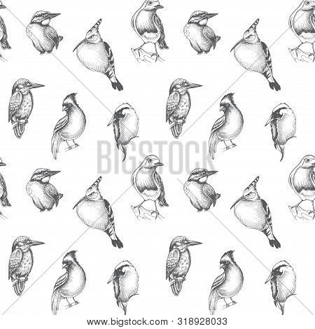 Sketch Hand Drawn Pattern With Kingfisher And Green Woodpecker. Animals Illustration Birds.