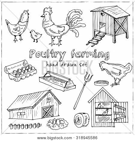 Poultry production isometric set of brood hen bird feeder canned goods eggs gastronomic products isolated vector illustration poster