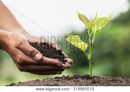 Hands Of Farmer Growing And Nurturing Tree Growing On Fertile Soil,  Environment Earth Day In The Ha