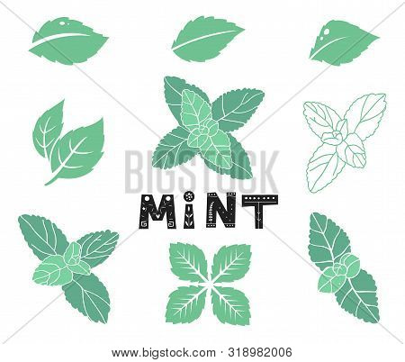 Blue Mint Leafs. Icons And Silhouettes Set. Leaves And Branches. Vector Illustration Isolated On A W