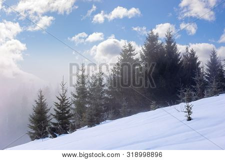 Spruce Forest In The Morning. Gorgeous Winter Scenery In Foggy Weather. Trees On A Snow Covered Hill