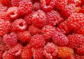 fresh juicy raspberries background delicious dessert sugary poster