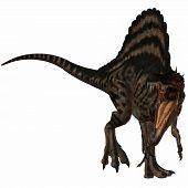 3 D Render of an Spinosaurus-3D Dinosaur poster
