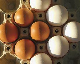Organic White Eggs Vs. Farm Organic White Eggs Vs. Farm Eggs. White Natural Organic Eggs And Chicken