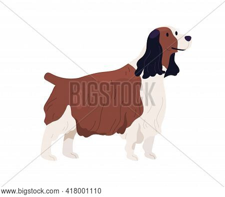 English Springer Spaniel Standing With Small Tail Up. Happy Welsh Dog With Shaggy Wavy Coat. Friendl