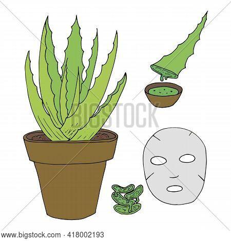 Aloe. Hand-drawn Aloe Bush, Face Mask, Aloe Juice. Line Drawing, Facial Care.