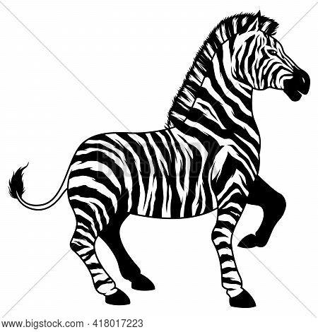 Black And White Illustration Of A Zebra.