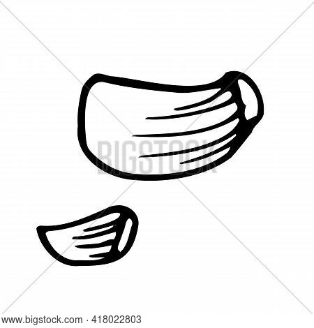 Garlic. Hand Drawn Vector Illustration For Logo, Print. Black Doodle. Hand Drawn Doodle Style Realis