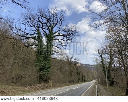 Large Flowering Tree In Mountainous Terrain. Fabulously Beautiful Tree Blooms On Hilly Area In Sprin