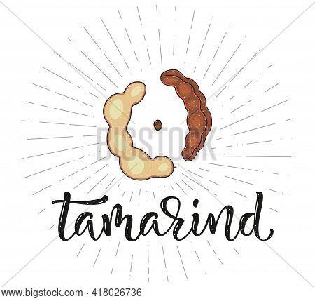 Tamarind - Fruit Symbol For Farm Market Menu, Healthy Food Design. Vector Stock Illustration And Let
