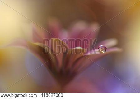 Beautiful macro shot of magic flowers.Border art design. Magic light.Extreme close up macro photography.Conceptual abstract image.Yellow and Pink Background.Fantasy Art.Creative Wallpaper.Beautiful Nature Background.Amazing Spring Flowers.Water drop.