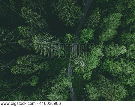 Aerial View Of Country Road Or Footpath In The Forest