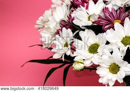 Bouquet Of Fresh White Chamomile Chrysanthemums. Spring Post Card