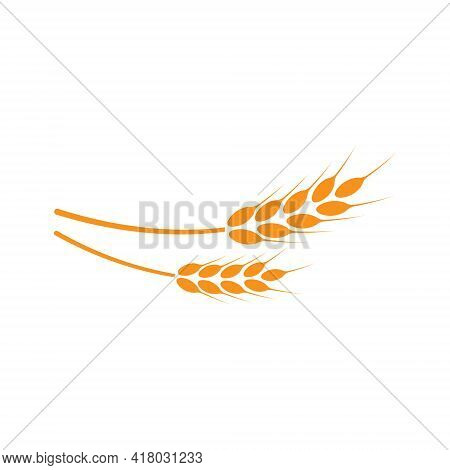 Ears Of Wheat. Logo. Vector Illustration On White Isolated Background