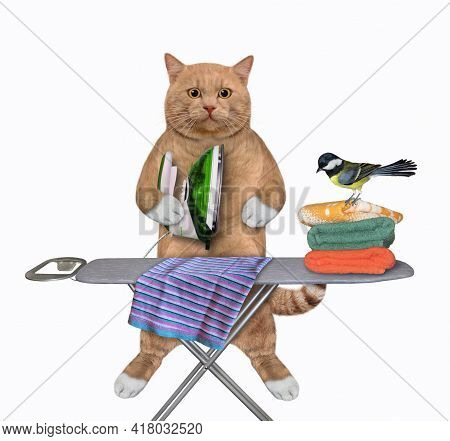 A Reddish Cat Irons Clothes Using An Iron On An Ironing Board After Laundry At Home. White Backgroun