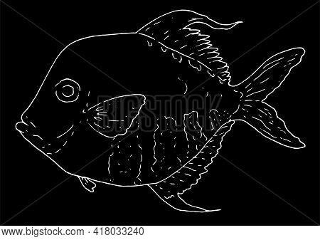 Hand Drawn Atlantic Moonfish Selene Setapinnis . Sea Food. Moonfish. Sea Fish.tasty Seafood. Ocean S